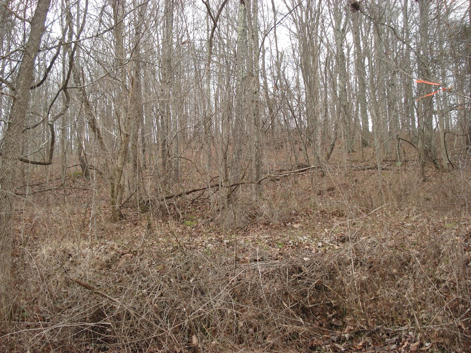 49+/-%20wooded%20acres.%20Multiple%20building%20sites%20and%20excellent%20hunting!!