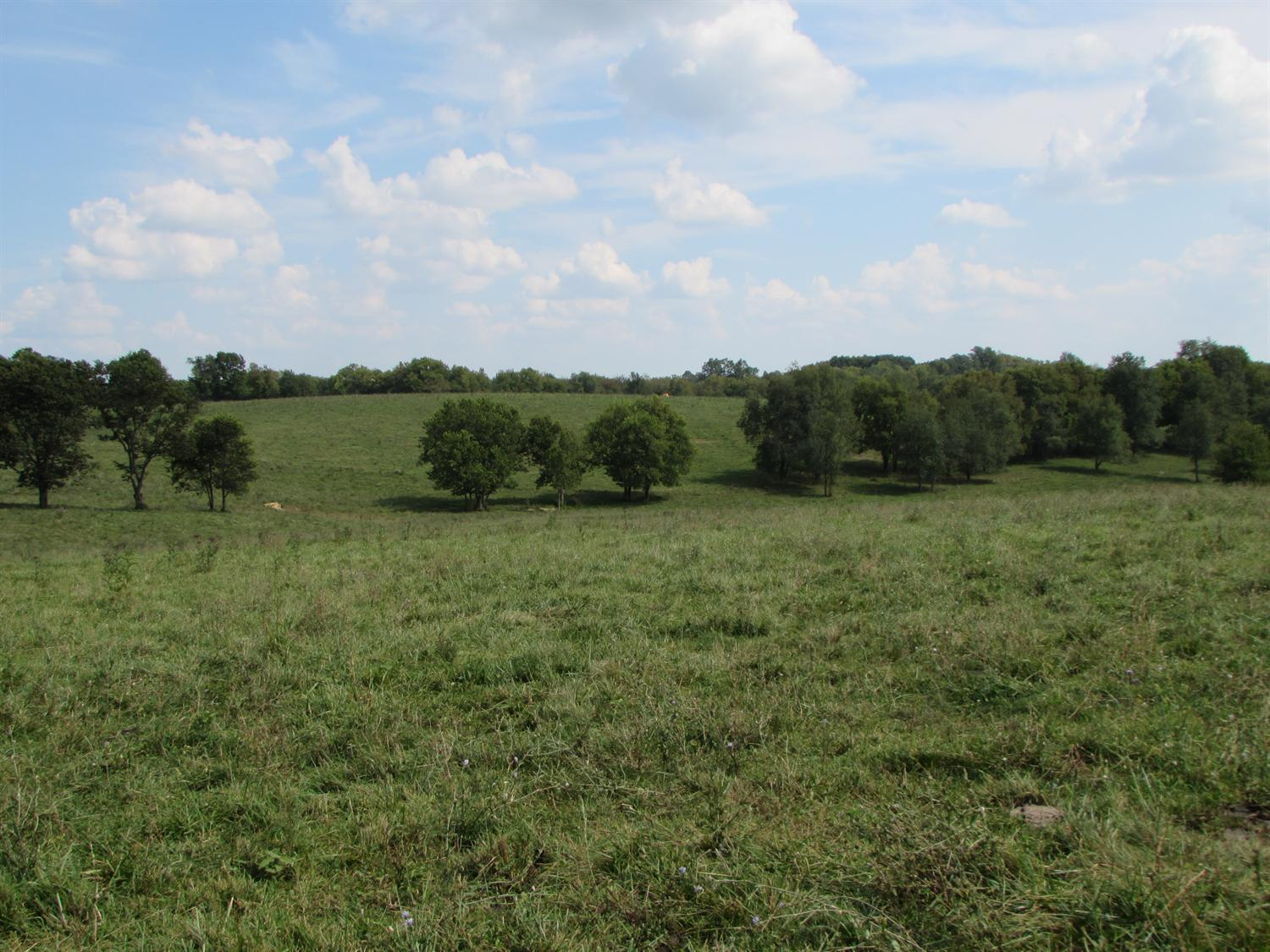 Beautiful%20403%20ac.%20cattle%20farm%20with%20rolling%20patures%20and%20scattered%20wooded%20areas.%20Turn%20key%20stocker%20operation%20with%20excellent%20forages%20and%20opportunities%20for%20expansion.%20Improvements%20include%20timber%20frame%20stock%20barn%20with%20loft,%20cattle%20pens,%20tobacco%20barn,%20bulk%20feed%20bin,%202%20grain%20bins,%20and%20livestock%20water%20tanks%20throughout.%20Two%20entrances%20on%20Gay%20Rd.%20and%20two%20on%20Oldson%20Rd.%20Owner/agent
