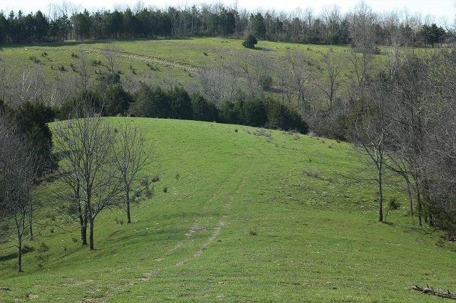 Attention%20all%20outdoorsmen!%20%20You%20don't%20want%20to%20miss%20the%20opportunity%20to%20own%20110%20acres.%20%20With%20lots%20of%20wild%20game,%20it's%20a%20hunters%20dream.%20Seller%20call%20it%20slaughter%20ridge.%20%20Half%20woods%20and%20half%20cleared%20makes%20it%20perfect%20to%20bring%20your%20buddies%20and%20your%204-wheelers.%20Turn%20this%20place%20into%20your%20own%20paradise.