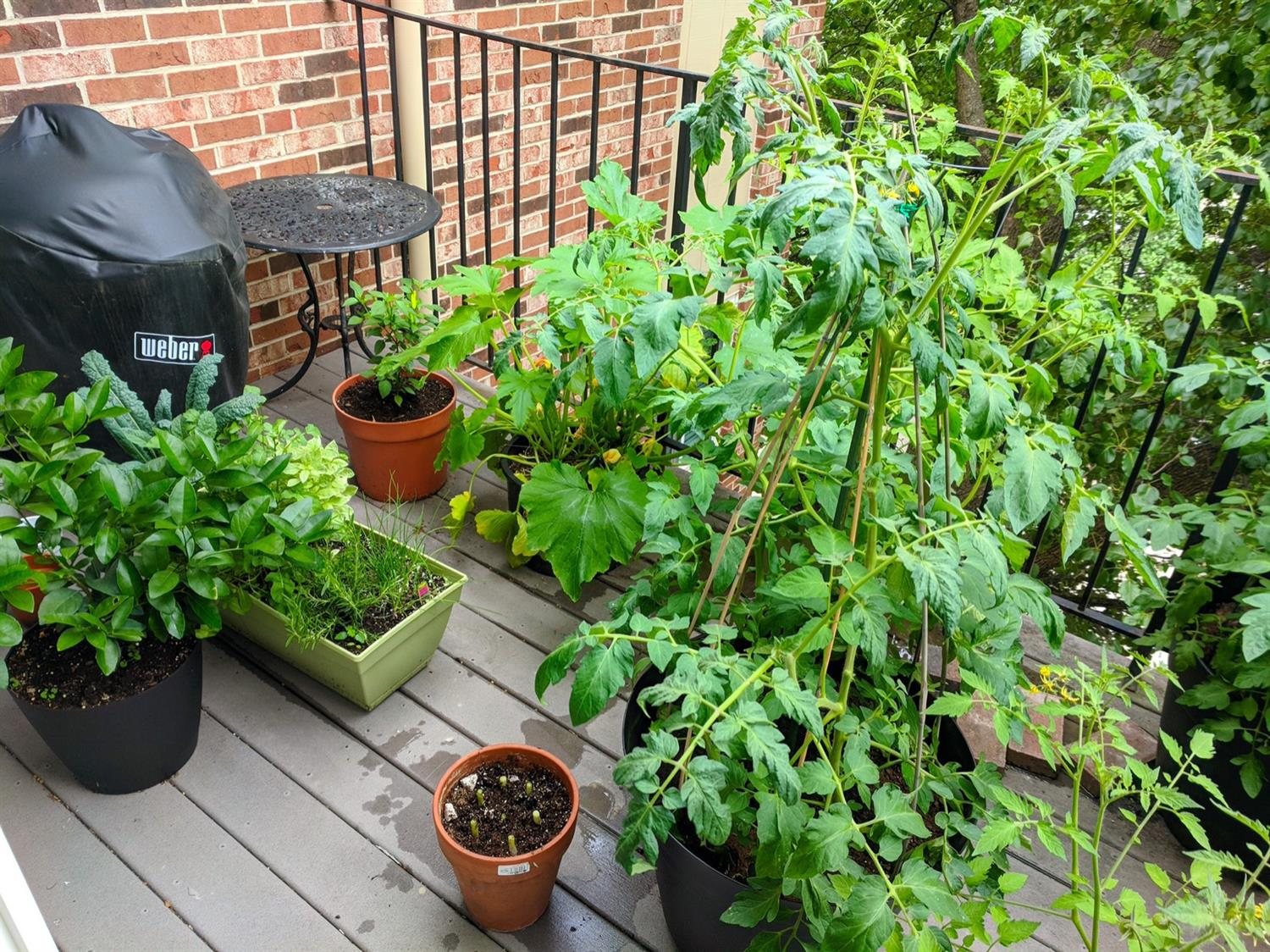 The private balcony is also a great place for container grown veggies!  Your own garden in the city!  The light here is perfect.