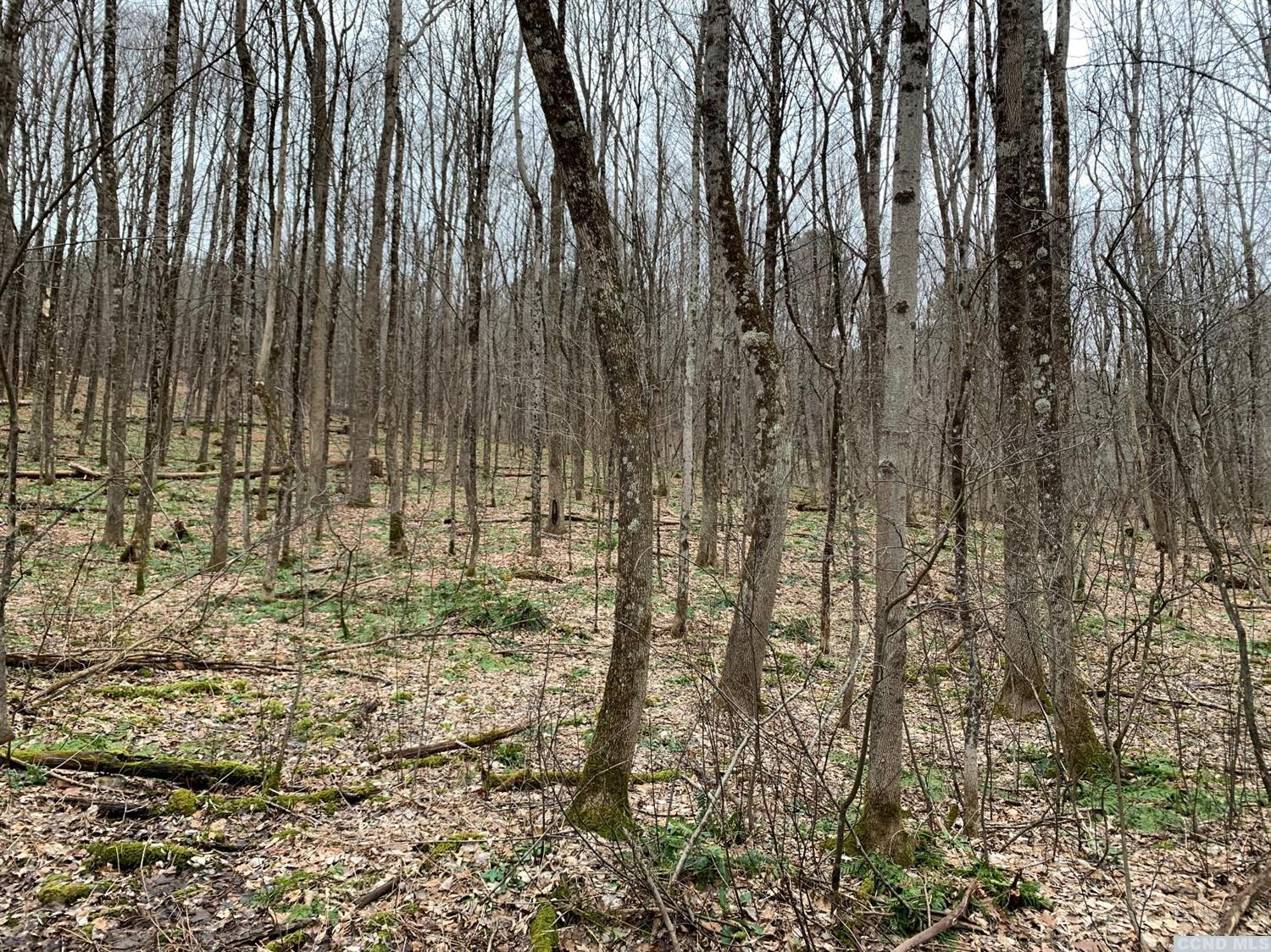 Lots of potential here.  Sparsely treed, slightly sloped to build your dream home.  Country road close to route 20 with easy commute to the Berkshires and parkway, only 30 minutes to Albany.