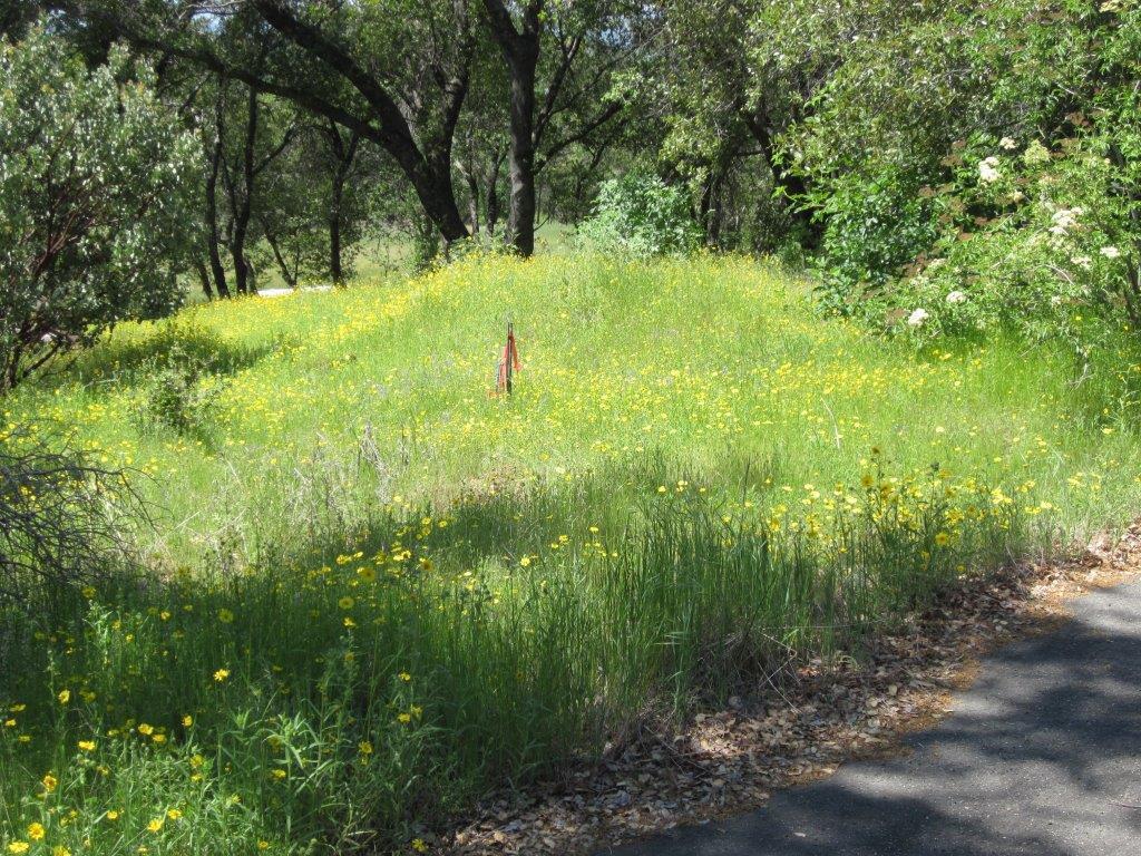 0 Enchanted Oaks Dr, Coarsegold, CA, 93614