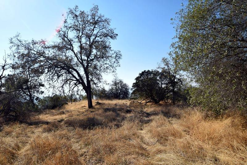 40 acres with stunning views and privacy. Several building sites available. Native oaks and pines. Long dirt and gravel road to get there but very quiet and peaceful once you arrive. Warning you may not want to leave.  Owner will carry! (additional 40 acres with shop, power, well available as also see listing # ) Seller will consider financing with appropriate terms call listing agent for details.