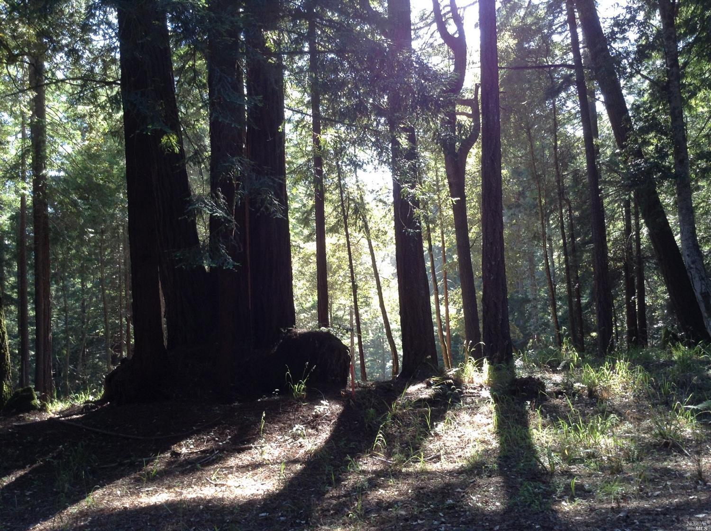 Listing 21816848 : 22047  Rust Drive, Timber Cove, CA, 95450  (photo 9)
