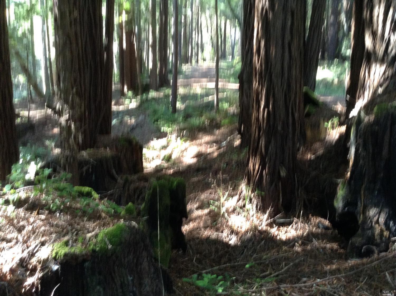 Listing 21816848 : 22047  Rust Drive, Timber Cove, CA, 95450  (photo 31)