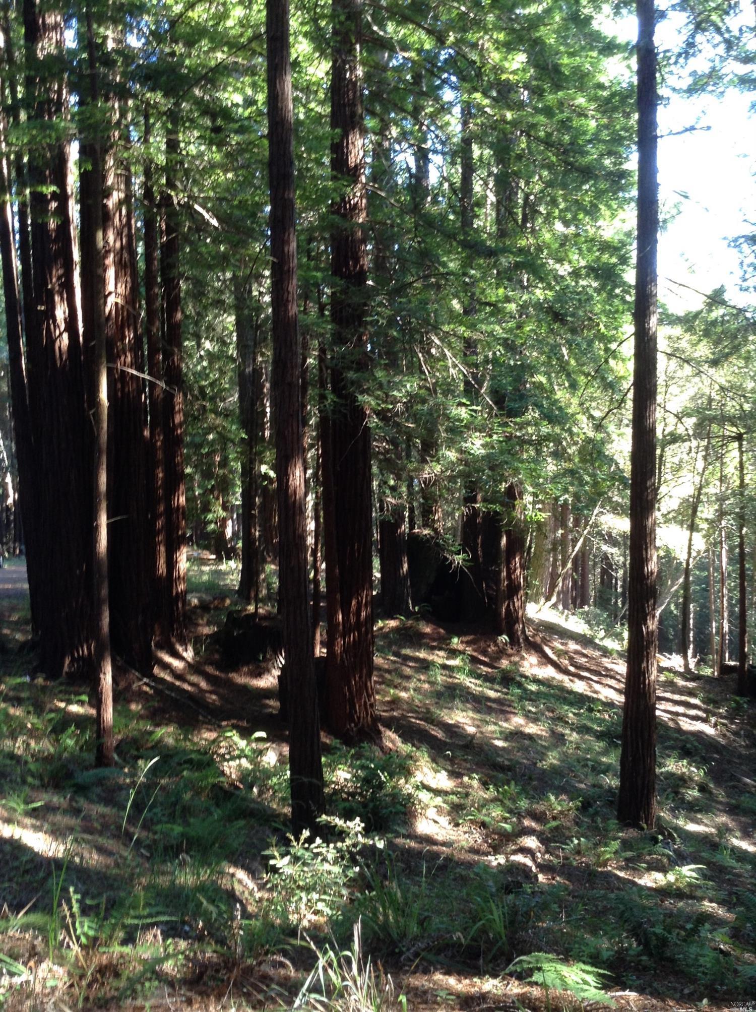 Listing 21816848 : 22047  Rust Drive, Timber Cove, CA, 95450  (photo 35)