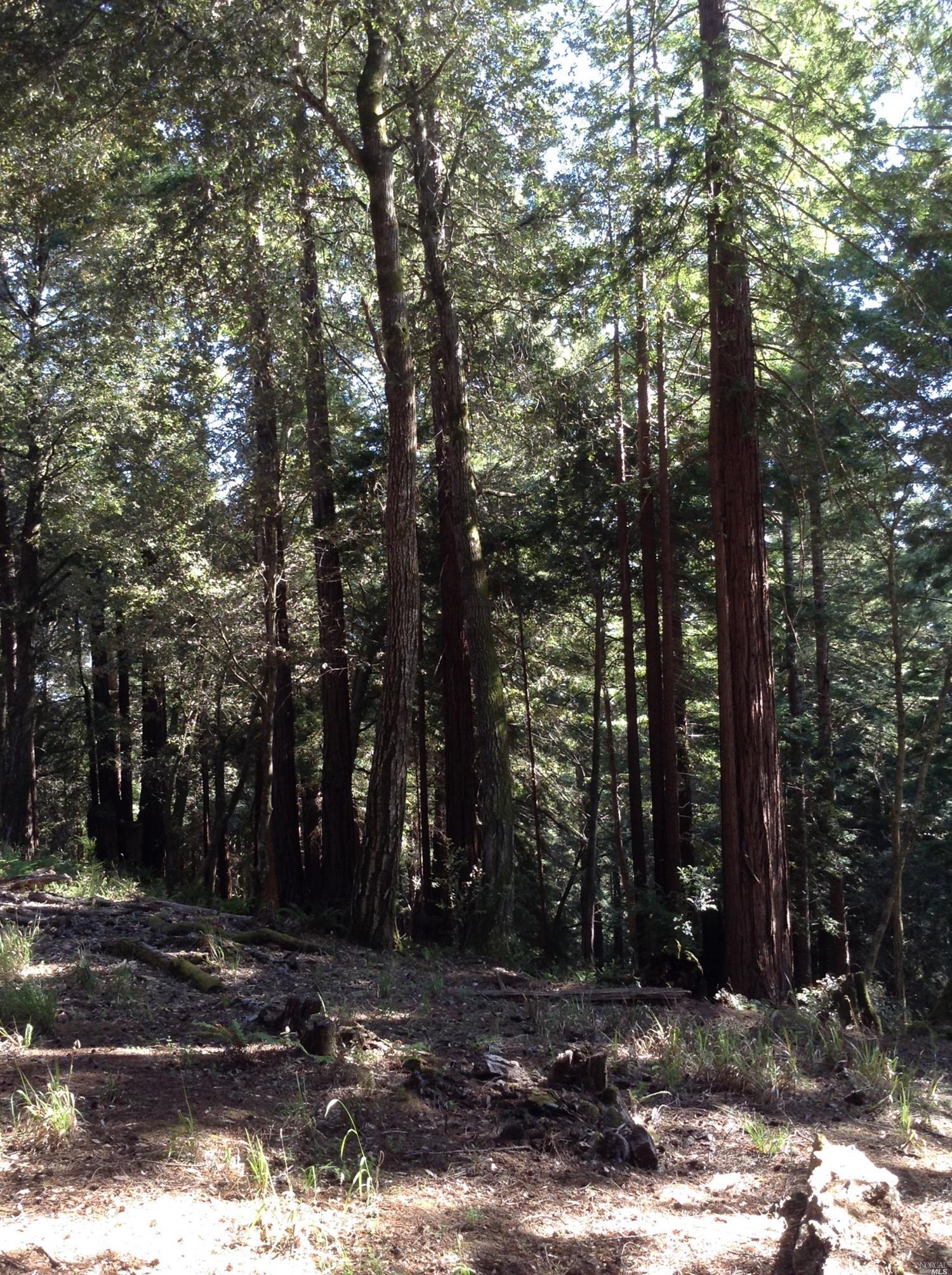 Listing 21816848 : 22047  Rust Drive, Timber Cove, CA, 95450  (photo 17)