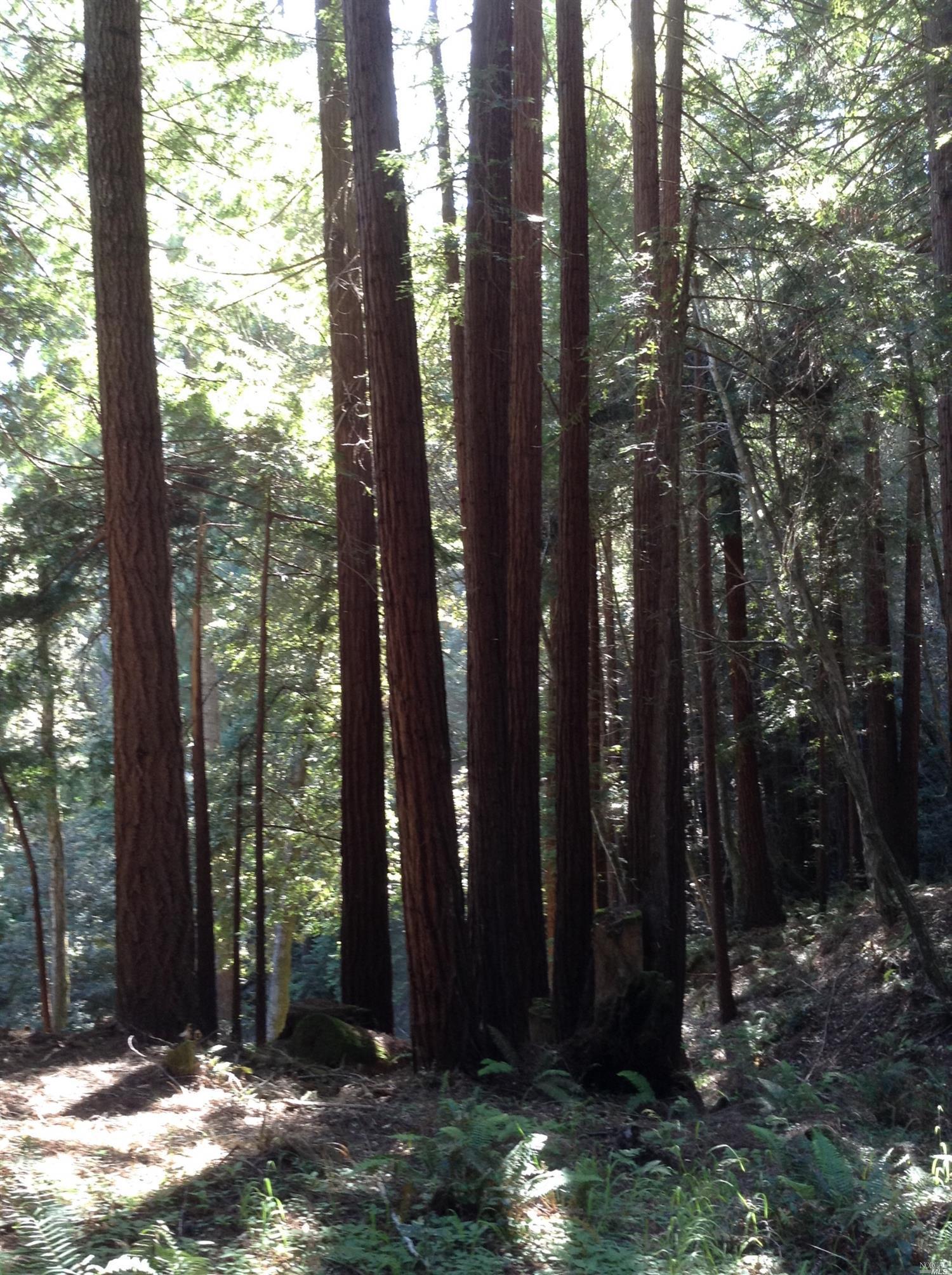Listing 21816848 : 22047  Rust Drive, Timber Cove, CA, 95450  (photo 30)