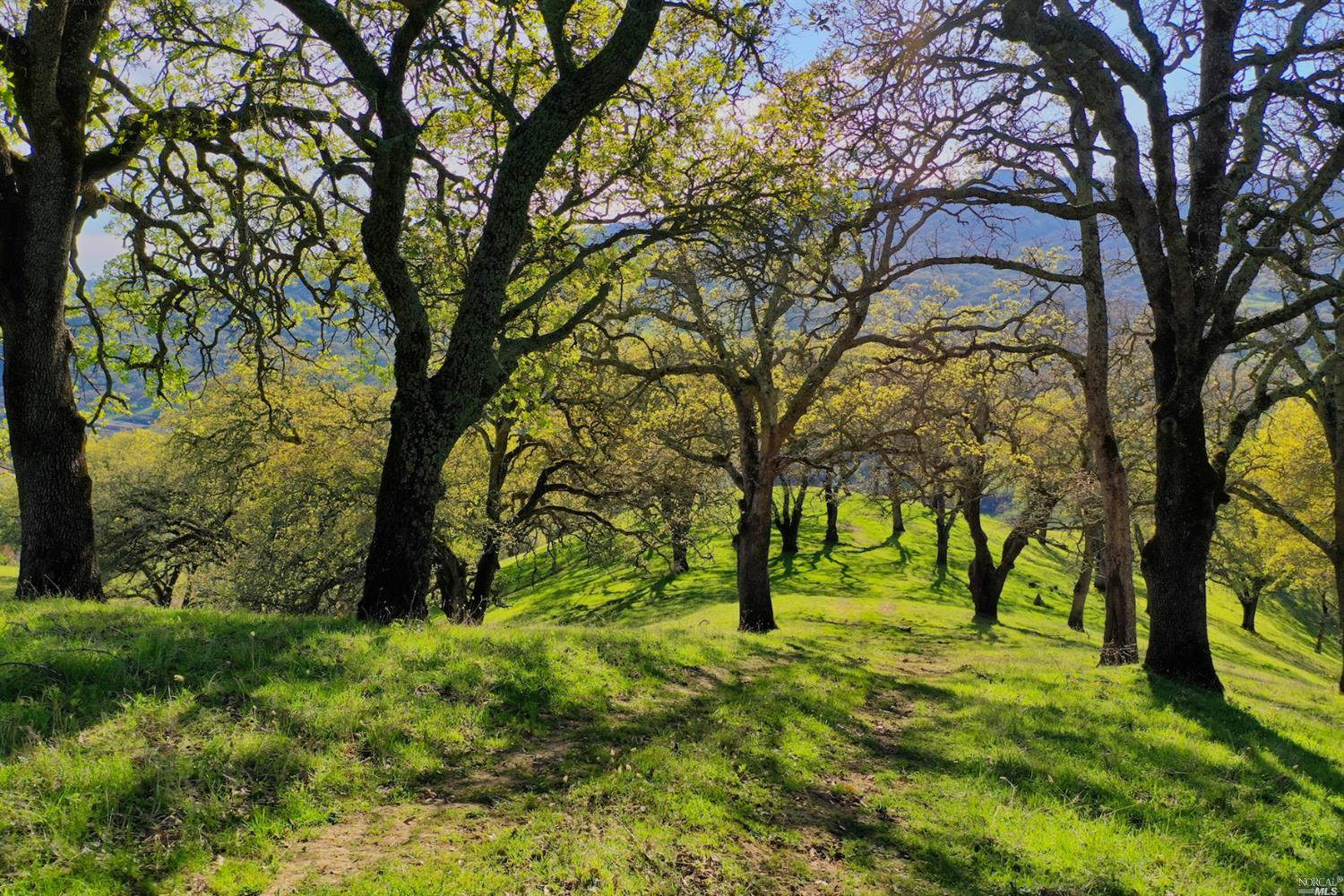 A Premium Lifestyle awaits, right off the I-680 / I-80 corridor in prestigious lower Wooden Valley, in the Napa Valley AVA. The 40+/- acre plot is located in an exclusive gated community on Okell Hill. As you drive through the heavy wrought iron gates you quickly realize why this is a popular place to build a private Vineyard Estate. The stunning 40+/- acres draws you in, as you look out over the breathtaking views of rolling green hills, vineyards, the Suisun Bay & even Mount Diablo! Others have already snapped up neighboring plots of land. (Currently there is a lot line adjustment being done, where 4+/- acres will be added to an adjacent lot). Neighboring vineyards are reliably producing fruit of very high quality & is rivaling that from